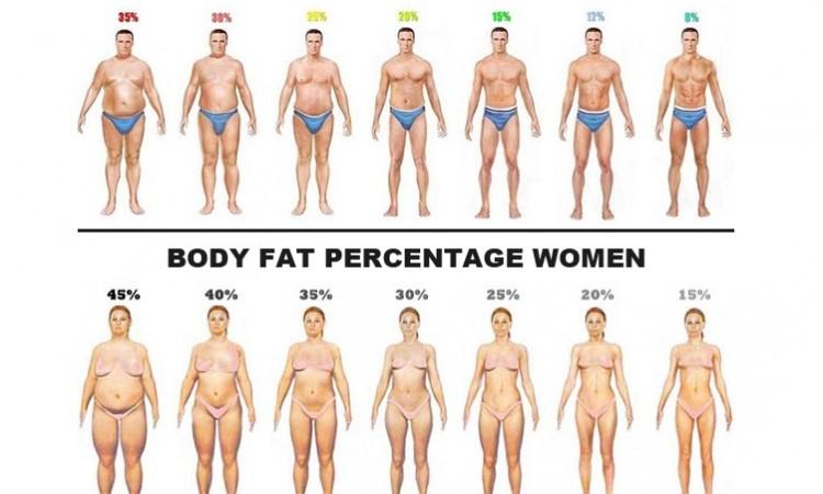 Kroppsfett kalkylator procent